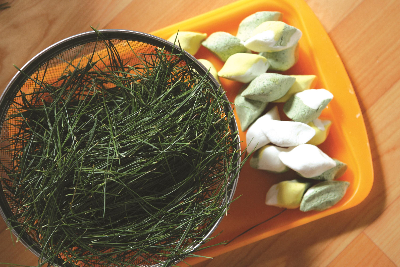 송편과 솔잎